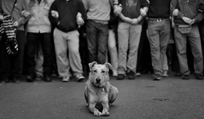 riotdog01