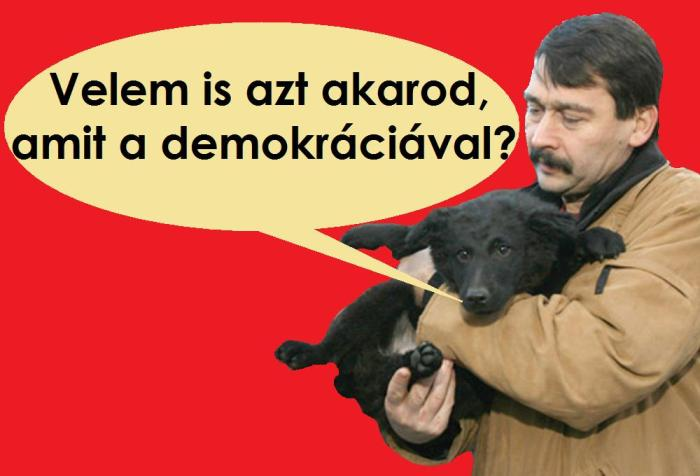 demokrcia