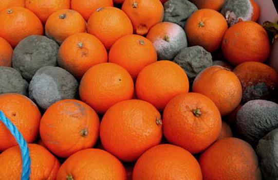 ronadt narancs